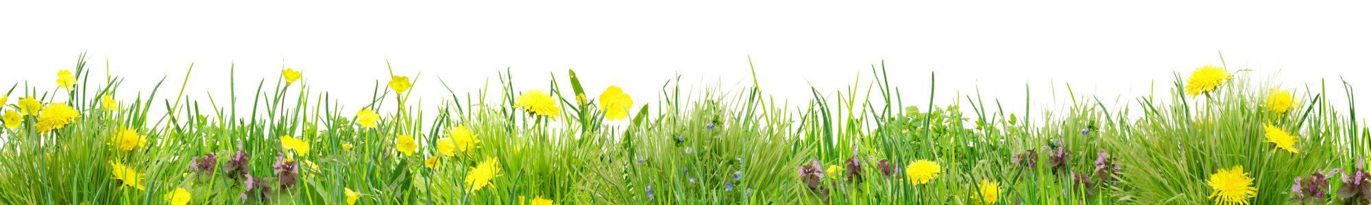 Herrlich schlichte Wildblumenwiese vor Wei